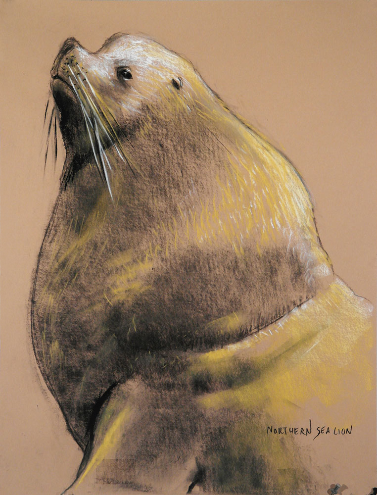 Anastasi-Northern-sea-lion-